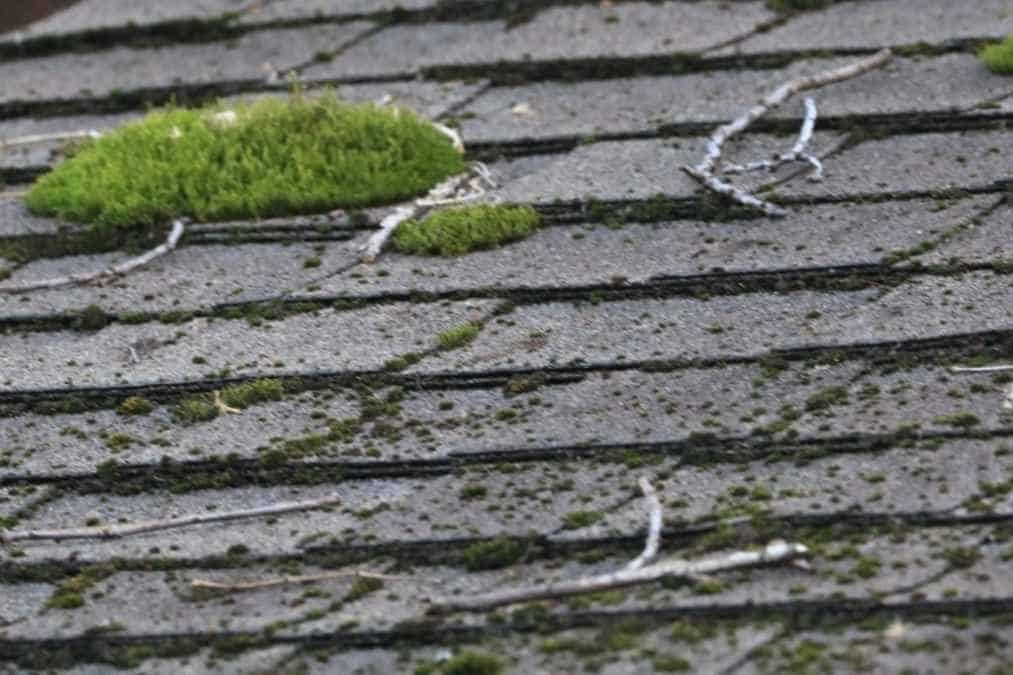 how to clean moss from roof